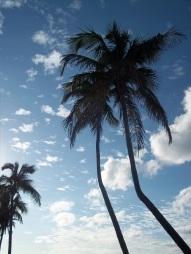 Bahamas Palms
