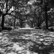 Black and white Forsyth Park with shadows from trees on the ground and the fountain in the background.